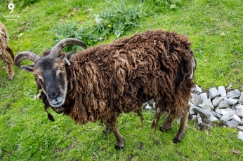 Moher Open Farm, Co. Clare