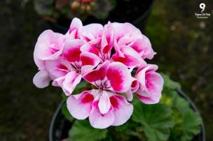 Vandeleur Walled Garden, Kilrush. Co. Clare