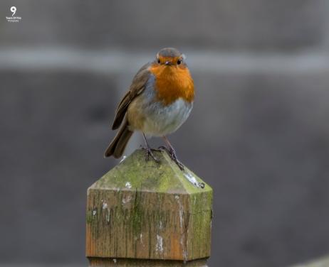 Robin - 11-02-2018