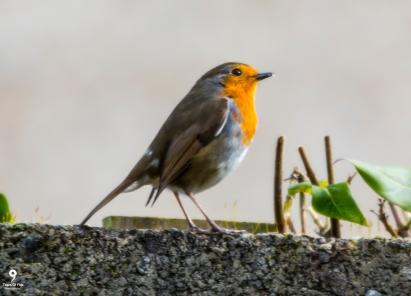 Robin - 17.02.2018